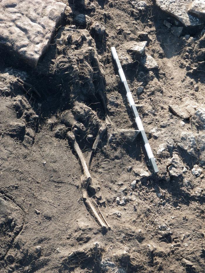 A skeleton found at Sandy borg ring-fort. Photo: Kalmar lans museum.