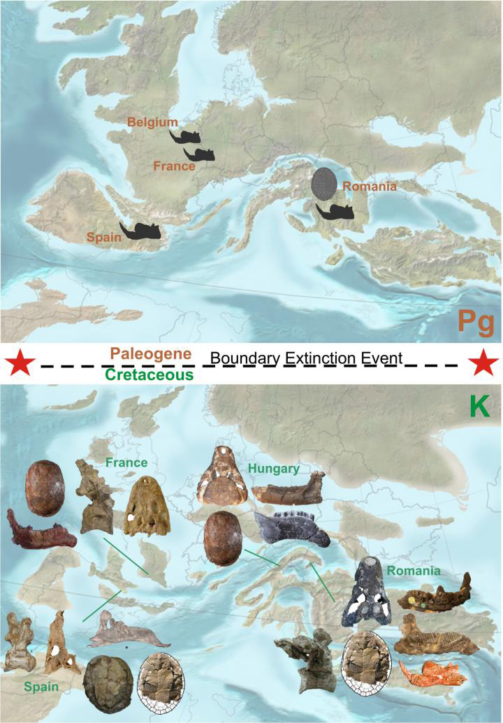 Fig. 1. Visual representation of the evolution of the European continental ecosystems across the Cretaceous-Paleogene Boundary Extinction Event. Credit: Background paleogeography reconstructions - Dr. Ron Blakey, Professor Emeritus Northern Arizona University; fossils: Dr. Jeremy E. Martin (for other fossil image credits see the ZooKeys paper of Csiki-Sava et al., doi: 10.3897/zookeys.469.8439).