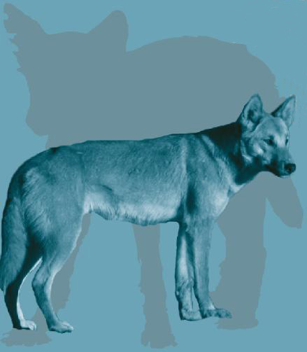 'Their 11,000- to 16,000-year association with humans makes dogs a promising subject for the study of ancient human behavior. Credit: Angus McNab, Julie McMahon.