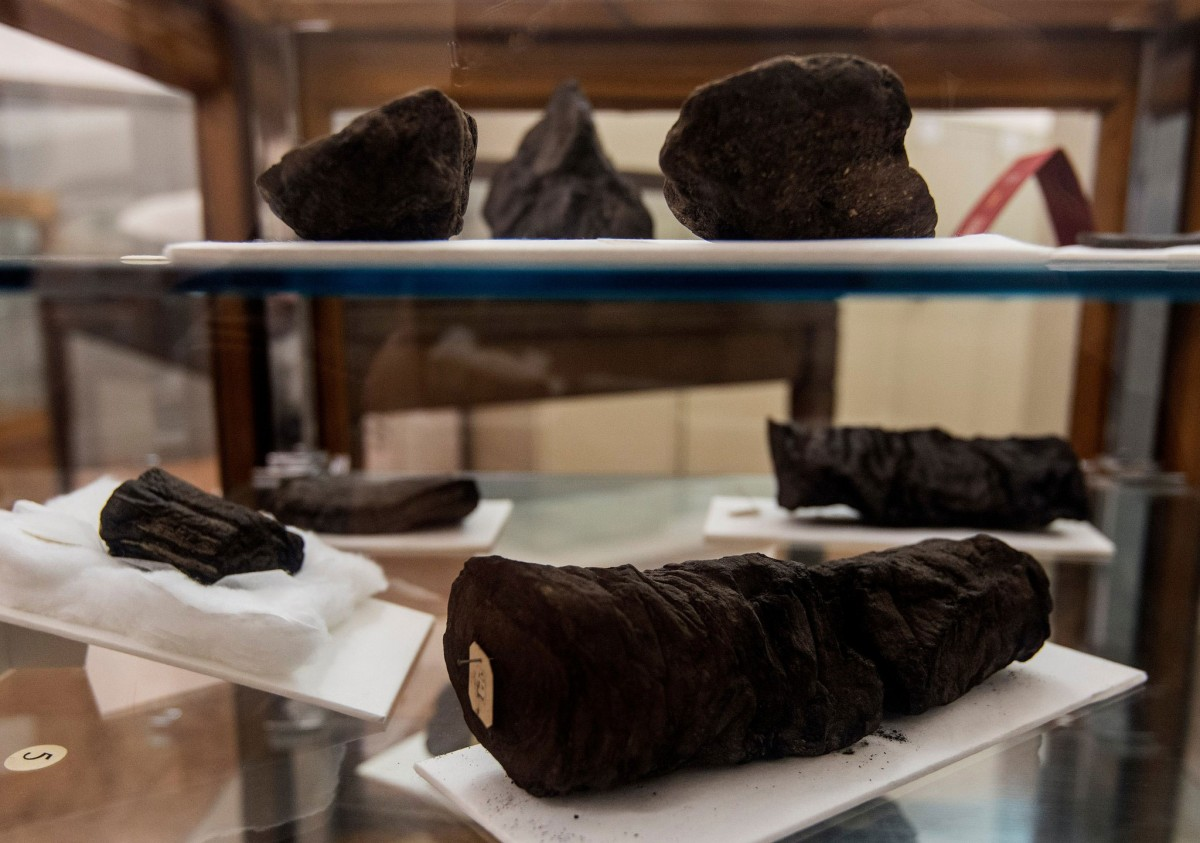 Carbonized Herculaneum papyrus scrolls.