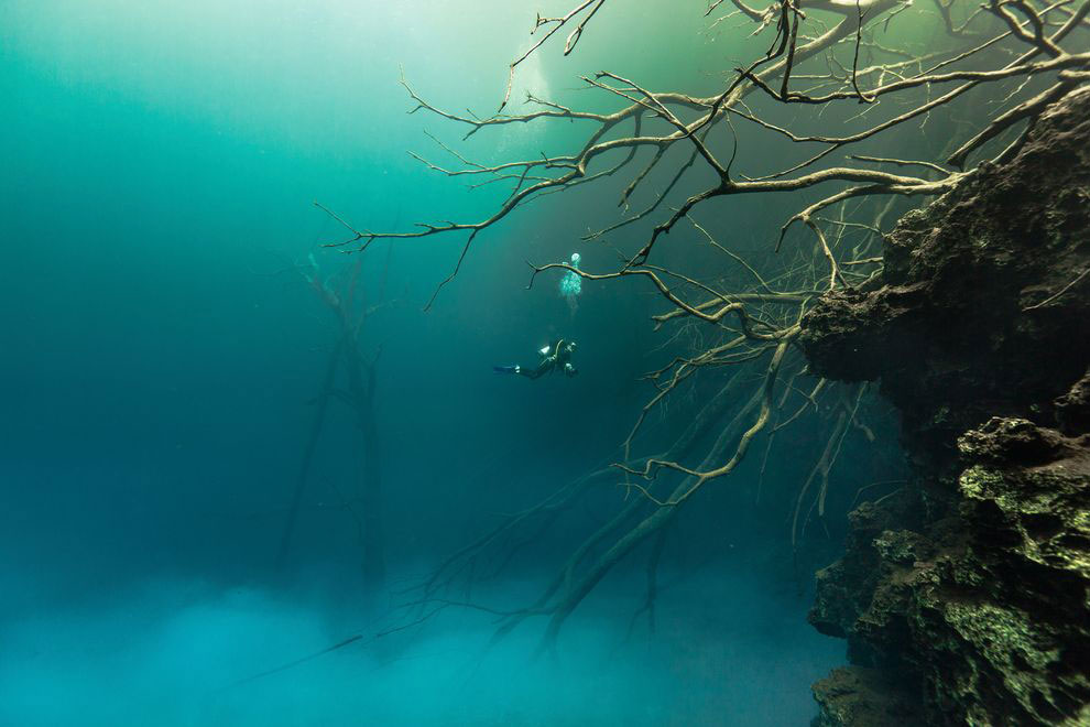 Divers explore sunken trees amid clouds of particulate matter in a pool at the Cara Blanca site. Photo Credit: Tony Rath photography.