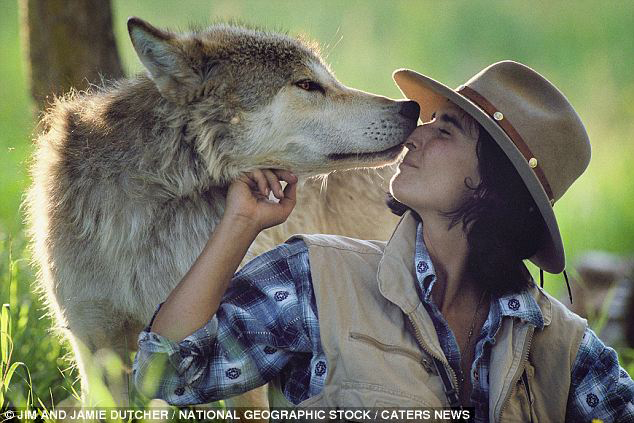 Photo of J. Dutcher and a wolf. She and her husband spent six years among wolves to observe and document the behavior of the wild animals. The couple formed and incredible bond with the wolves. ©Jim and Jamie Dutcher / National Geographic Stock / Caters News