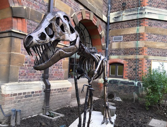 Clare the T-Rex at her new home at the Sedgwick Museum.