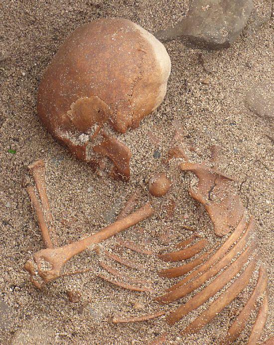 Sanday child burial: Skull and torso. [Photo: Sanday Ranger]