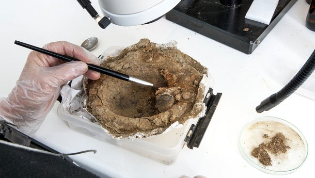 Remains of a leather purse were found inside the shield boss. (Photo: ÅGE HOJEM / NTNU / SCIENCE MUSEUM)