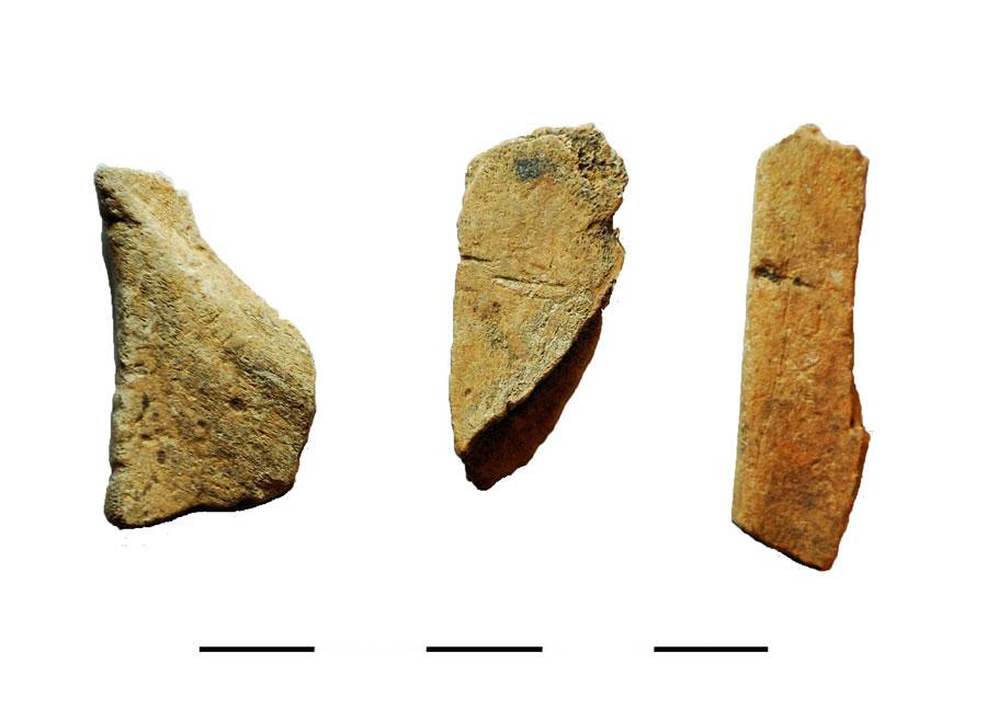 Fig. 2. Bones with cut marks.