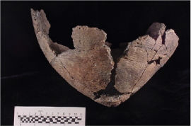 Vinette 1 vessel from the Peace Bridge site, Ontario (image courtesy of Archaeological Services Inc).