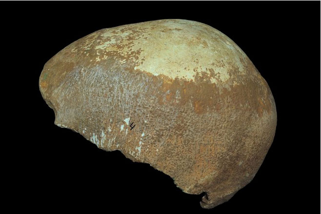 Partial human skull from Manot Cave. Photo credit: Clara Amit / Israel Antiquities Authority