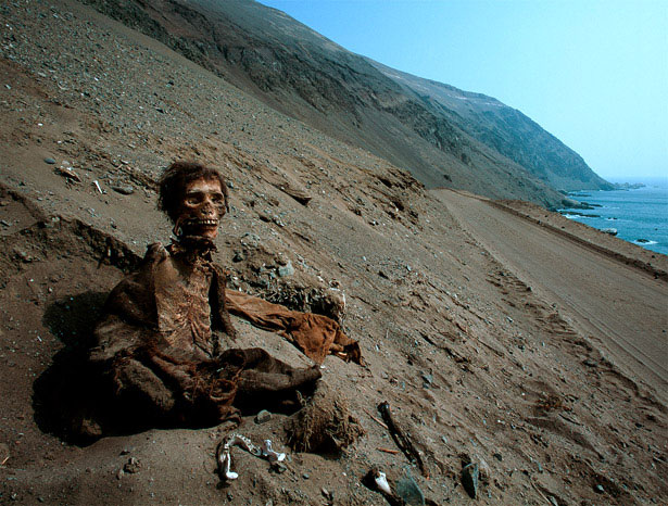 A typical specimen of a chinchorro mummy. Photo Credti:  Enrico Ferorelli / National Geographic.