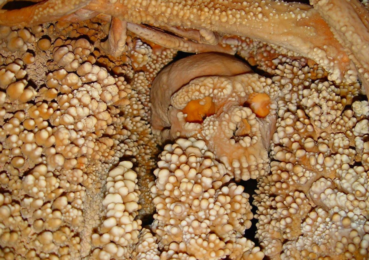 Altamura man, a fossil skeleton of the genus Homo found over 20 years ago in a  cave in Apulia, seems to date back to approximately 150,000 years ago. This was  shown in a study recently published in the Journal of Human Evolution, carried out  by the Sapienza University of Rome and the University of Florence. The study results  show that the skeleton seems to store the most ancient DNA of a Neanderthal  ever extracted so far [Credit: Redazione ResearchItaly].