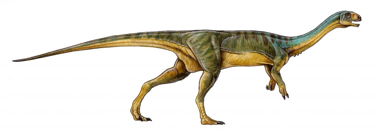 Chilesaurus diegosuarezi. Credit: University of Birmingham.