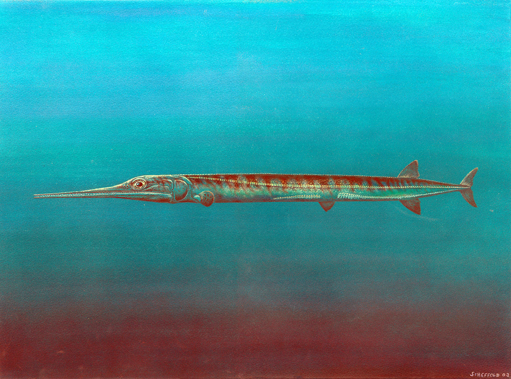 Life reconstruction of Saurichthys in the ancient sea of Middle Triassic. Credit: University of Zurich/B. Scheffold.