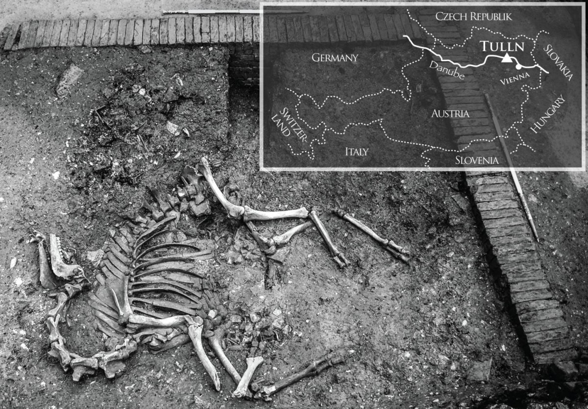 In situ view of the camel in the cellar. Inserted map indicates the geographical position of the town Tulln in Austria with a triangle. Photo Credit: Galic et al.