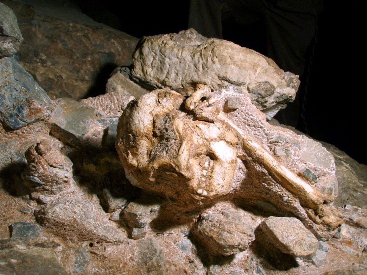 The researchers analyzed 11 rock samples from around the nearly complete Little Foot fossil skeleton from theSterkfontein Caves to gauge its age. Photo Credit: AFP/Getty Images.
