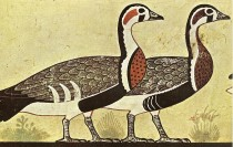 Egyptian 'Meidum Geese' are possibly a forgery