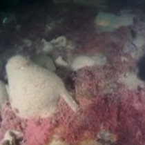 Byzantine shipwreck discovered off the coast of Sevastopol