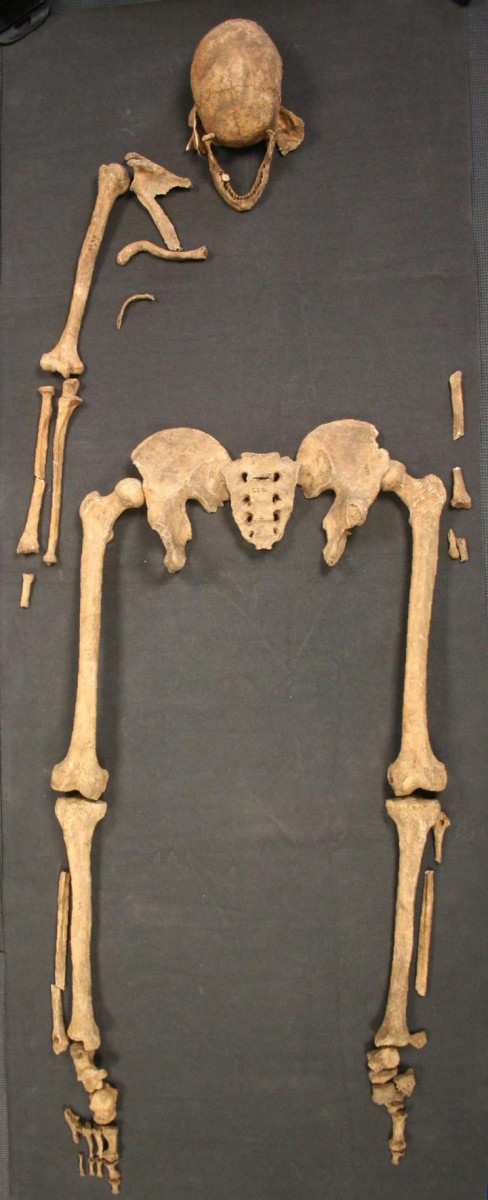 This is the Great Chesterford skeleton. Credit: University of Southampton.