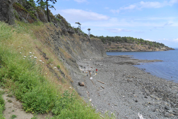 The shore where the fossil was found on the southwest tip of Sucia Island State Park. Photo credit: Burke Museum.