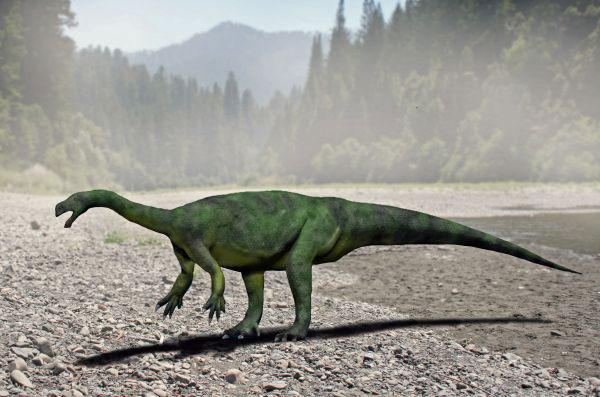 According to Senior Researcher Jonah Choiniere, Ph.D. of the University of the Witwatersrand Sefapanosaurus would have looked similar to Aardonyx. Image by: Nobu Tamura