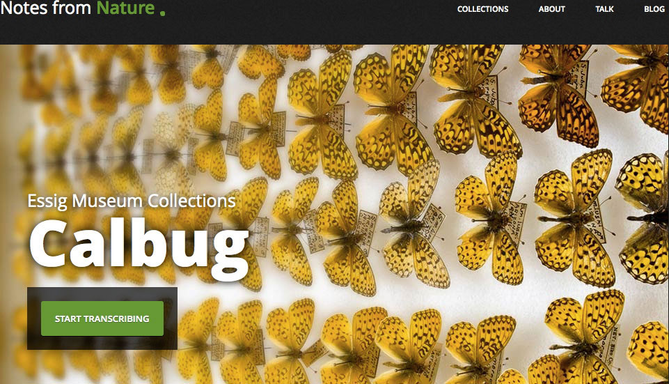 Fig. 1. The first page of the website of the Calbug project of the Essig Museum, (http://www.notesfromnature.org/#/archives/calbug), where the public is asked to help in transcribing information included in photographs, signboards and books from the museum's arthropod collections.