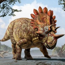 New species of horned dinosaur with 'bizarre' features revealed