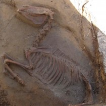 Intact horse burial unearthed in colonial St. Augustine