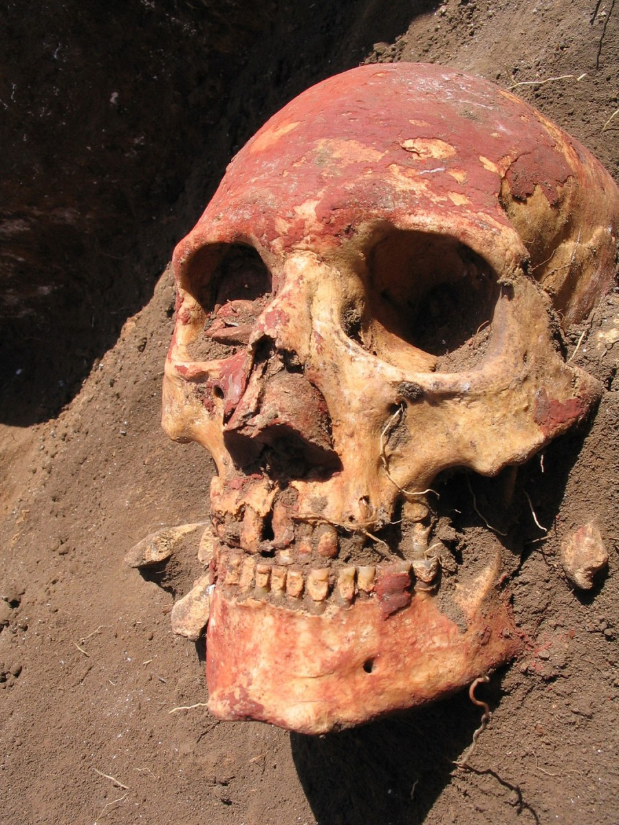 Yamnaya skull from the Samara region coloured with red ochre. (Photo: Natalia Shishlina).