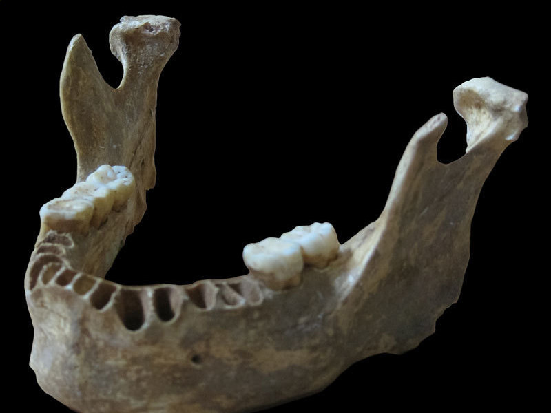 DNA taken from a 40,000-year-old modern human jawbone reveals that this man had a Neandertal ancestor as recently as four to six generations back. © MPI f. Evolutionary Anthropology/ Pääbo