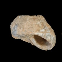 Modern human dispersal into Europe came from the Levant