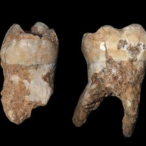 Ancient dental plaque reveals insights in Middle Pleistocene daily life
