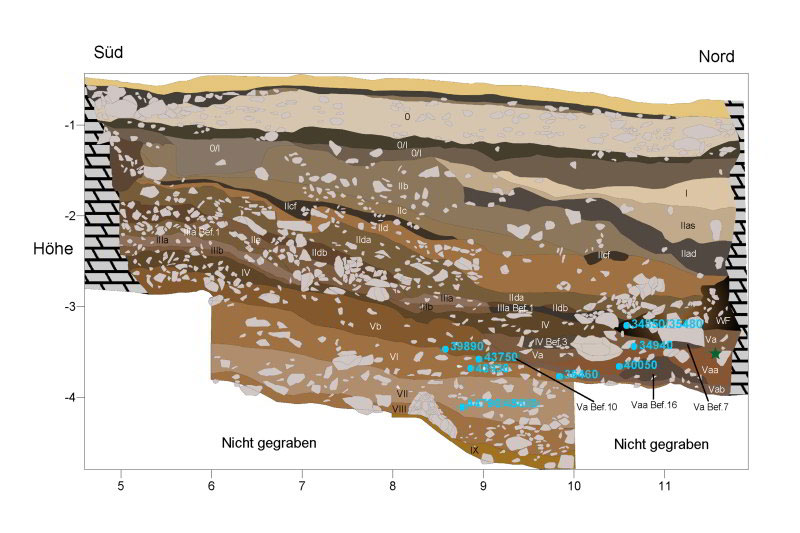 Stratigraphic profiles near where the new fragments were found; locations of the finds are marked with green stars. The blue ages are from radiocarbon measurements on bones. Photo Credit: M. Malina/ University of Tübingen,