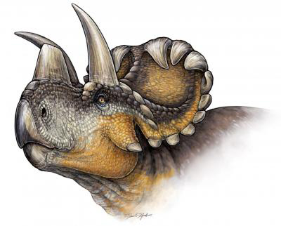 This is a life reconstruction of Wendiceratops pinhornensis. Credit: Danielle Dufault.