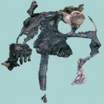 A herbivorous mammalian ancestor