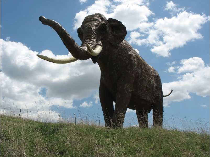 The temperate-zone straight-tusked elephant (Elephas antiquus) is one of the many large mammals that a new study from Aarhus University estimates would have occurred in present-day northern Europe if modern humans had never existed. Unfortunately, the species is now globally extinct and this illustration only a reconstruction. (Photo: Wikimedia Commons).