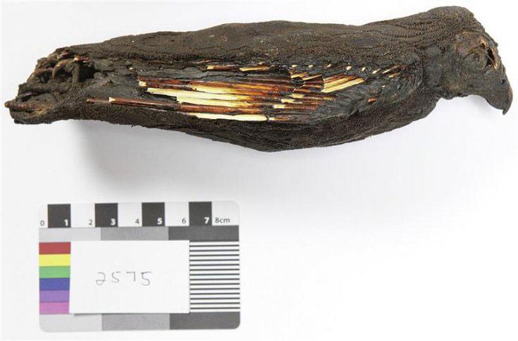 Photograph of SACHM 2575 showing the mummy of a bird. Photo Credit: Carina Beyer / Stellenbrock University.