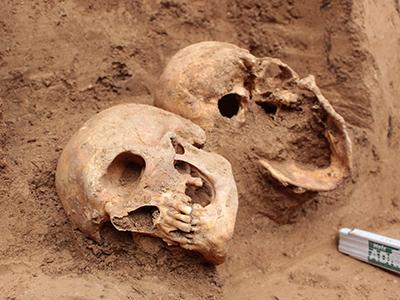 Skulls found in the tombs of Napoleonic soldiers, in Frankfurt, on September 2015. © Denkmalamt Frankfurt am Main.