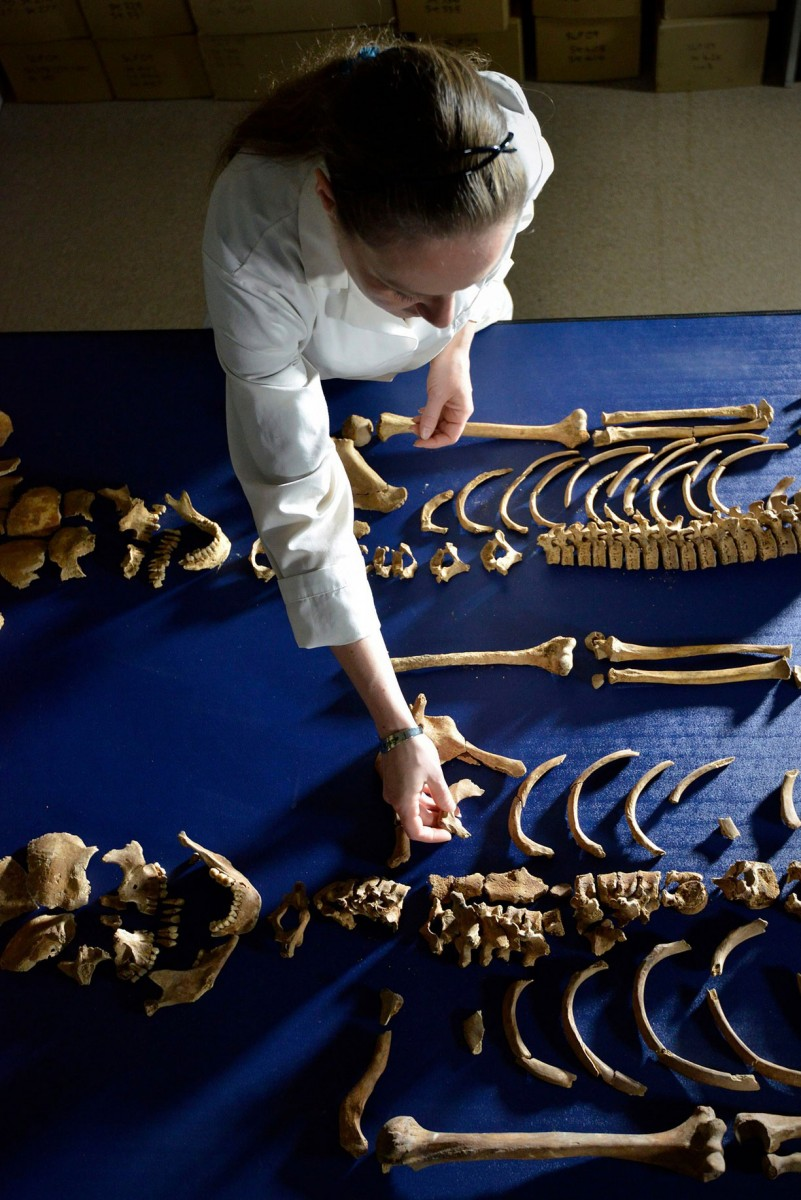 The skeletons have been painstakingly reassembled. Photo Credit: Richard Rayner/NNP/Durham Univer/PA.