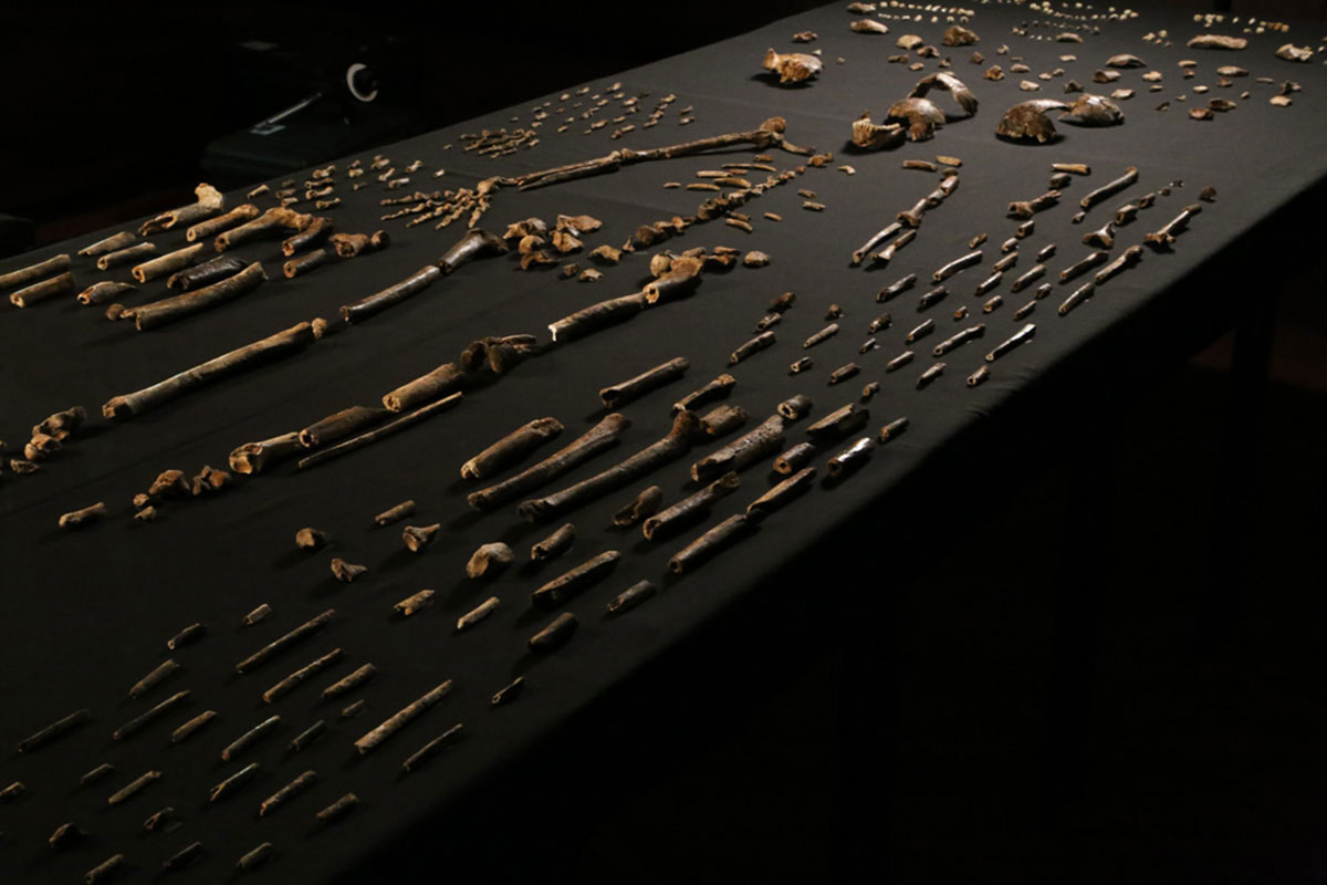 Homonaledi bones: It's an anatomical mosaic. Credit: John Hawks