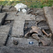 Site of elephant butchering came to light in Megalopoli