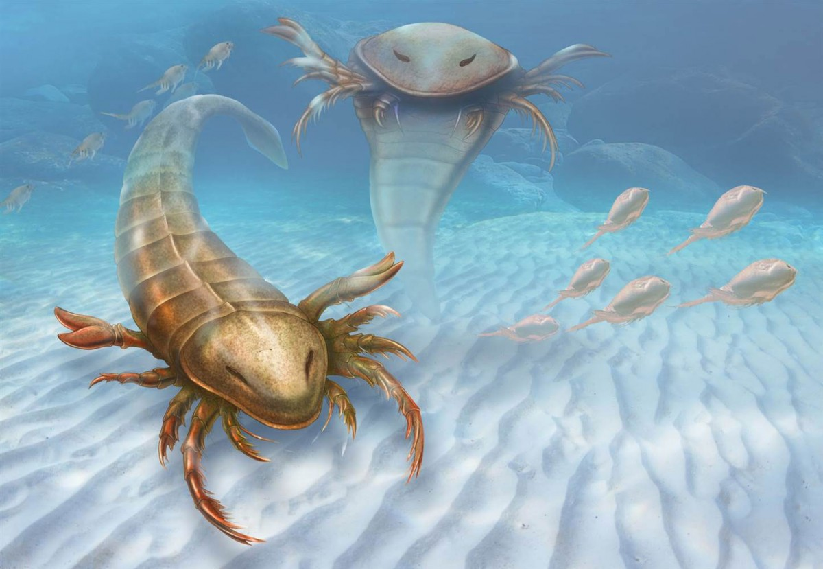 An artist's impression of the world's oldest sea scorpion, Pentecopterus decorahensis . Photo Credit: Patrick Lynch/Yale University.