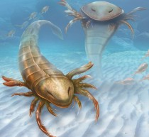 Pentecopterus: the world's largest sea scorpion
