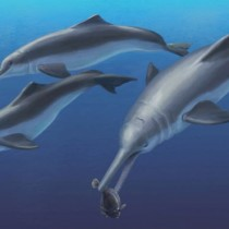 Fossil specimen reveals a new species of ancient river dolphin