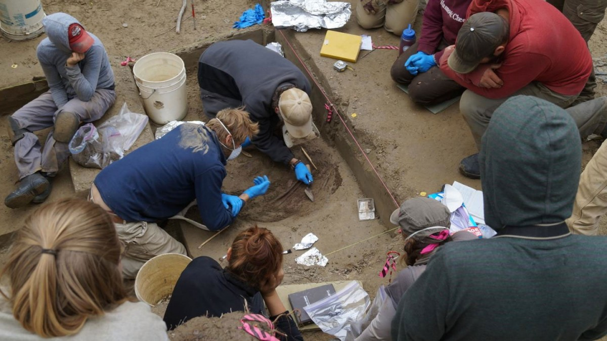Researchers work on excavation at the Upward Sun River site in Alaska. Credit: Photo courtesy of Ben Potter, UAF.