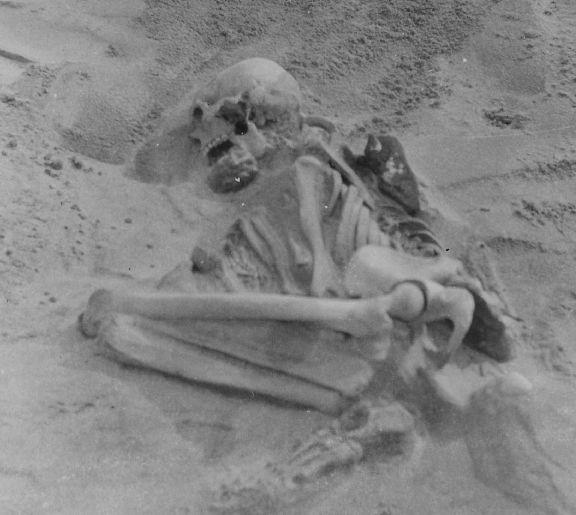 Tiree skeleton in situ, taken during the original excavation in 1912 Credit: The Hunterian.