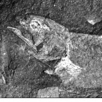 Africa's earliest known coelacanth found in Eastern Cape
