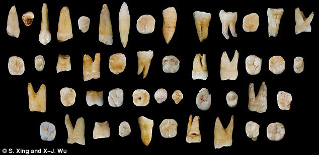 Scientists discovered 47 teeth from modern humans in Fuyan Cave in southern China's Hunan province that date back at least 80,000 years. Photo Credit: Science Daily/S. Xing and X-J. Wu.