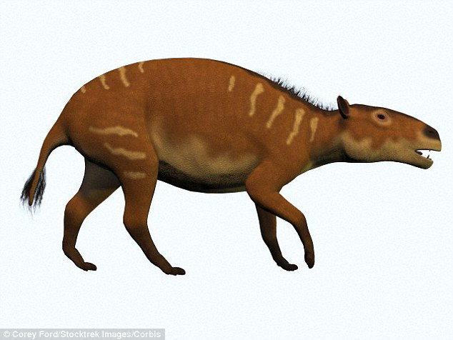 These ancient creatures, known as Eurohippus messelensism had four toes on each forefoot and three toes on each the hind foot, and it was about the size of a modern fox terrier. Artist's impression pictured.