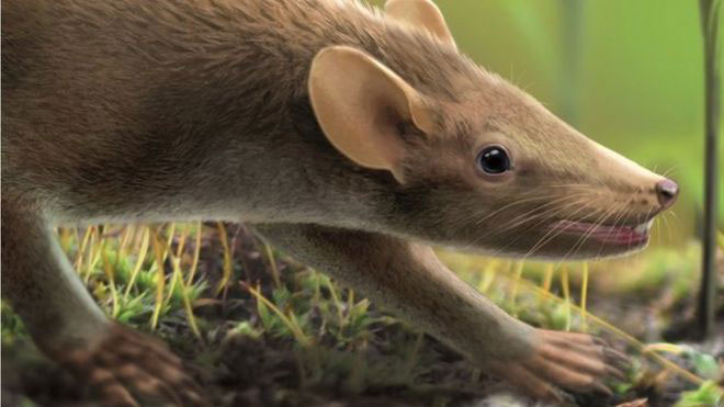 Representation of the creature. It must have resembled a todays rat. Image Credit: BBC/Oscar Sanisidro.