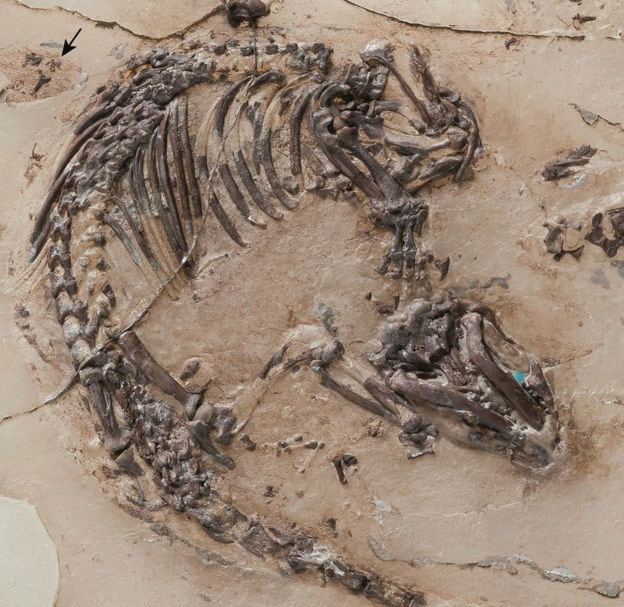 The fossil was found in limestone in Las Hoyas Quarry, Spain. Photo Credit: BBC/Georg Oleskinski