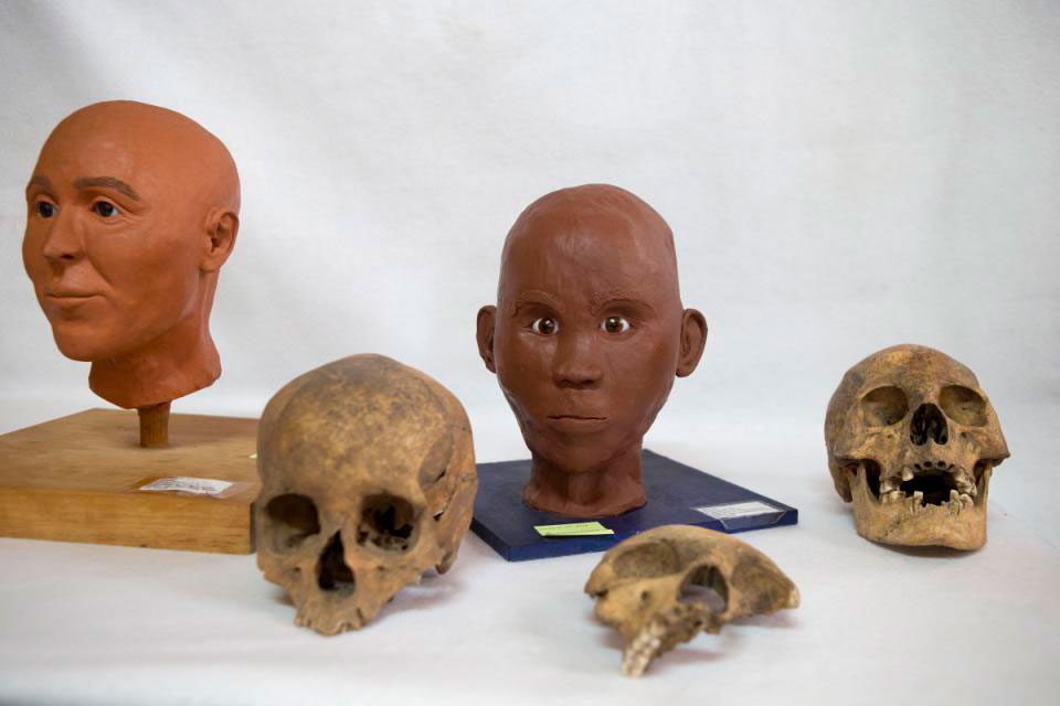 The skull of a Spaniard, bottom left, a child, center, and a person of African heritage  sit alongside models of what a Spanish conquistador and a person of mixed Amerindian  and African descent may have looked like, at the Zultepec-Tecoaque archaeological  site in Tlaxcala state, Mexico. Photo Credit: AP/Rebecca Blackwell.